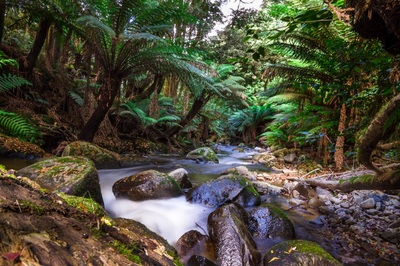 Landscape photography rainforest stream
