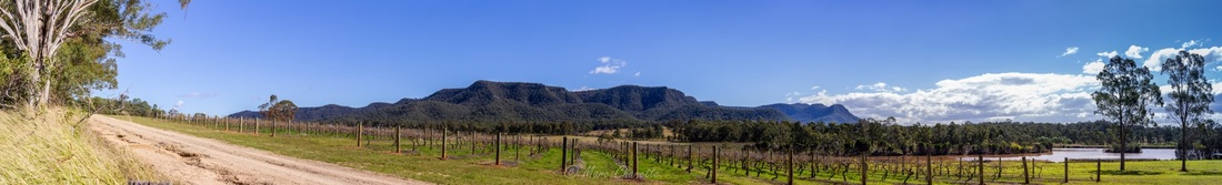 Landscape photography winery panoramic