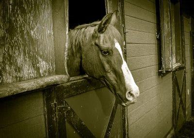 Outdoor photography horse stable